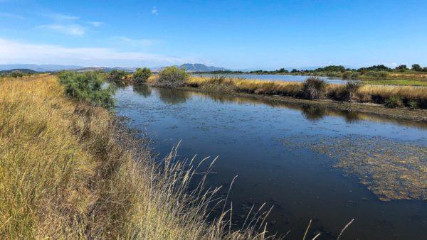 Weitläufiges Feuchtbiotop und Heimat oder Zwischenstation für über 250 Vogelarten