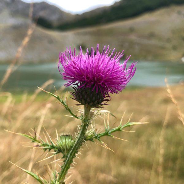 Mit dem Offroad-Camper zum Bukumirsko jezero in Montenegro