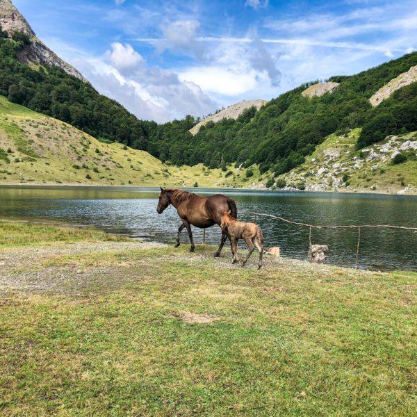 Rikavačko jezero in Montenegro mit traumhafter Landschaft