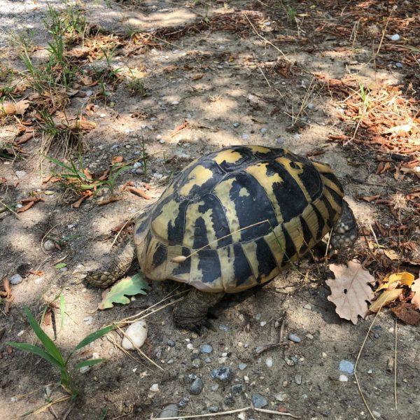 4x4 Antrieb hatte nicht nur der Offroadcamper sondern auch die freilebenden Schildkröten