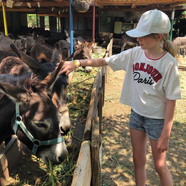 Über 50 Esel leben auf der Farma magaraca Martinici in Montenegro